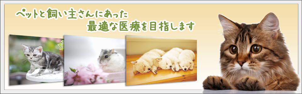 犬・猫・ウサギ・ハムスター・小鳥などの診察|みどり動物病院 相模原市